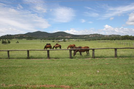 Centrally located and well developed horse farm